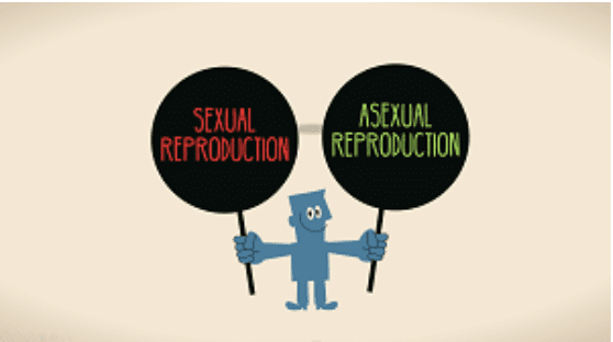 Year 8 - Sexual vs. Asexual Reproduction Presentation
